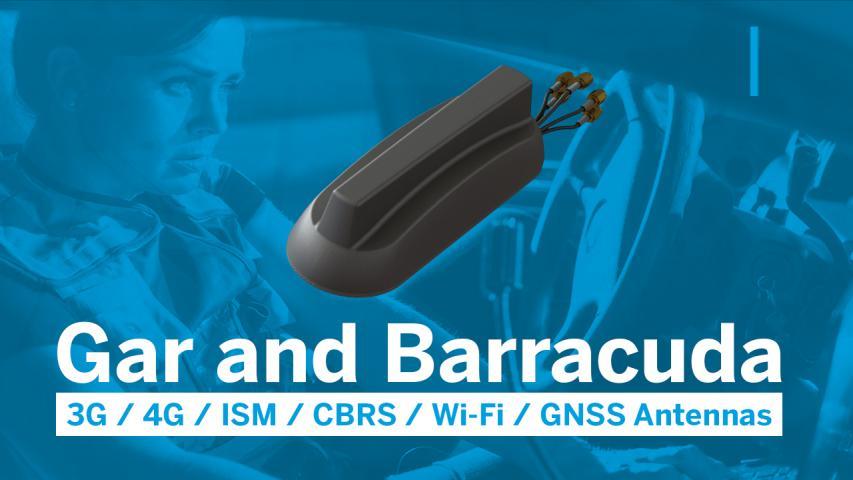 Gar and Barracuda